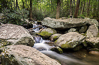 Summer along the Roaring Fork River in Great Smoky Mountains National Park.