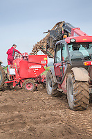 Loading Maris Piper potatoes into a Grimme planter - Lincolnshire, March