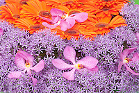 Pleasing but Clashing orange gerbera & purple allium flowers & pink orchids floral arrangement