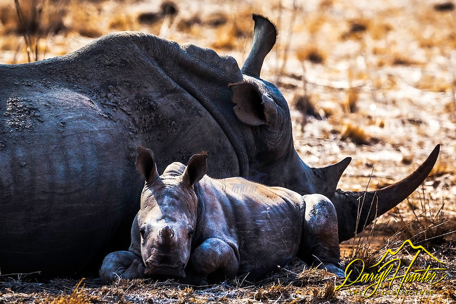 Baby Rhino, Kruger National Park.  No such thing as an ugly baby.  Well maybe we might want to reconsider that.