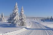 Natur - vinter