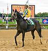Lake Creek the winningest horse of the 2016 meet winning The Sheila Parrott Memorial Trophy Race at Delaware Park on 10/13/16