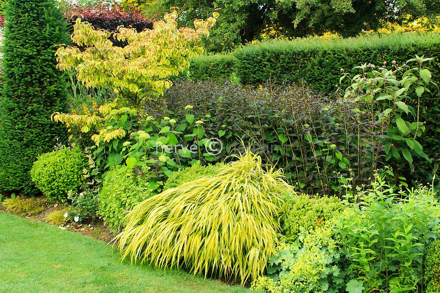 Jardins du pays d'Auge (mention obligatoire dans la légende ou le crédit photo):.Cornus, graminées, renouée, alchemille.
