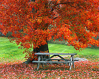 Autumn scene in West Park New York