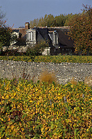 Europe/France/Centre/37/Indre-et-Loire/Montlouis-sur-Loire: Vignoble AOC Montlouis-sur-Loire