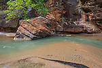 A boulder in the virgin river just downstream from the narrows at Zion National Park, Utah, USA