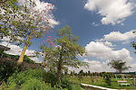 Israel, Sharon region. Utopia Park in Kibbutz Bahan