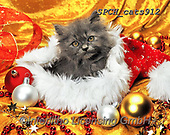 Xavier, CHRISTMAS ANIMALS, WEIHNACHTEN TIERE, NAVIDAD ANIMALES, photos+++++,SPCHCATS912,#xa# ,cat