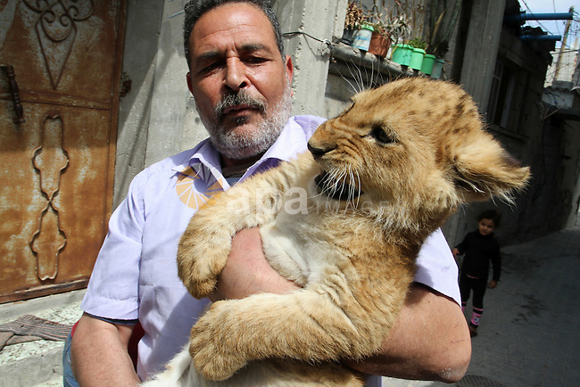 Palestinian Saad al-Jamal holds one of his two lion cubs outside his family house at Al-Shabora refugee camp in Rafah in the southern Gaza Strip March 19, 2015. Al-Jamal has eventually achieved his dream of raising lions at home after acquiring the two cubs, whose parents are believed to have been smuggled into Gaza through a tunnel along the border with Egypt nearly three years ago. His family have named the female cub Mona, an Arab name, while the male lion was named Alex. Photo by Abed Rahim Khatib