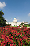 Washington DC; USA:  The Capitol Building, legislative center of the US government, with red flowers.Photo copyright Lee Foster Photo # 3-washdc83145