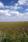 FL: Florida Everglades National Park,.sawgrass from Pa-hayokee.Photo Copyright: Lee Foster, lee@fostertravel.com, www.fostertravel.com, (510) 549-2202.Image: flever210