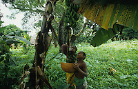 Children packing up plaintain fruit for cooking