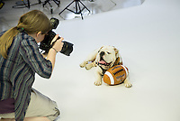 Behind the scenes of a photoshoot with Bully XX Champ, with Beth Wynn, photographer for MSU Office of Public Affairs.<br />