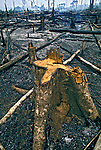 Floresta queimada em Rondônia. 1998. Foto de Ricardo Azory.