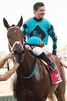 ARCADIA, CA  FEBRUARY 3 :#1 Roy H, ridden by Kent Desormeaux, in the winners circle after winning the Palos Verdes Stakes (Grade ll) on February 3, 2018, at Santa Anita Park in Arcadia, CA.(Photo by Casey Phillips/ Eclipse Sortswire/ Getty Images)