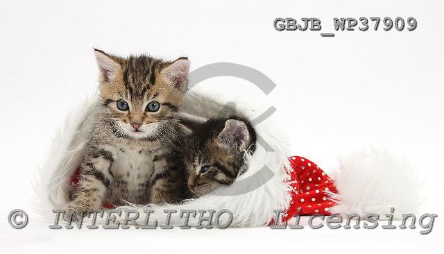 Kim, CHRISTMAS ANIMALS, photos, GBJBWP37909,#XA# stickers