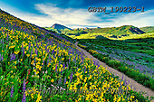 Tom Mackie, LANDSCAPES, LANDSCHAFTEN, PAISAJES, photos,+America, American, Colorado, Crested Butte, North America, Tom Mackie, USA, beautiful, blue, cirrus, cloud, clouds, dramatic+outdoors, flower, flowers, footpath, hill, hills, hillside, horizontal, horizontals, landscape, landscapes, larkspur, mules e+ar sunflower, nobody, path, pathway, pathways, scenery, scenic, weather, wildflower, wildflowers, yellow,America, American, C+olorado, Crested Butte, North America, Tom Mackie, USA, beautiful, blue, cirrus, cloud, clouds, dramatic outdoors, flower, fl+,GBTM190223-1,#l#, EVERYDAY