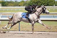 #16Fasig-Tipton Florida Sale,Under Tack Show. Palm Meadows Florida 03-23-2012 Arron Haggart/Eclipse Sportswire.