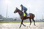 November 1, 2018: McKinzie, trained by Bob Baffert, exercises in preparation for the Breeders' Cup Classic at Churchill Downs on November 1, 2018 in Louisville, Kentucky. Jamey Price/Eclipse Sportswire/CSM