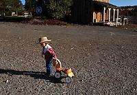 Dressed as a cowgirl, 2 1/2 year old Josie Lauman heads out to the barn with her little toy horse to see watch her mother train wild horses.<br />