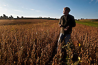 Skinny Greenfield checks a soybean field at dawn.<br /> --Harvesting soybeans on the Greenfields' farm in Skaneateles New York.