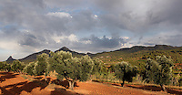 Olive groves beneath a stormy sky and against the massive slopes of Els Ports Natural Park, Horta de Sant Joan, Terra Alta, Tarragona, Spain. Picture by Manuel Cohen