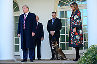 United States President Donald J. Trump, joined by Vice President Mike Pence and first lady Melania Trump, introduces Conan, the United States Army dog that assisted in the raid that killed ISIS leader Abu Bakr al-Baghdadi, in the Rose Garden of the White House. Credit: Erin Scott / CNP/AdMedia