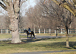 A thoroughbred makes it's way to the training track at Overbrook Farm in Colts Neck, New Jersey.