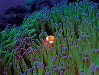 Timor-Leste (Underwater)