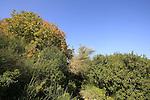 Israel, Tel Aviv University Botanic Gardens