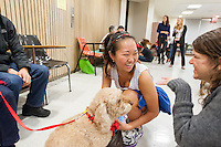 "Occidental College students enjoy ""Doggy Play Date"" during finals week in Lower Herrick Chapel, Monday, Dec. 10, 2012, Los Angeles, California. This is the  third year in a row the event, hosted by the Office of Student Life and provided by Therapy Dogs International. (Photo by Marc Campos, Occidental College Photographer)"