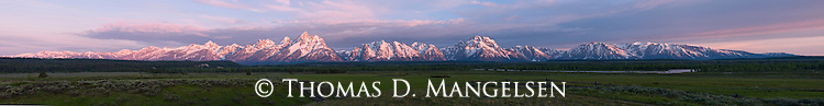 The rose-hued blush of the rising sun paints the snowy peaks of the Tetons, which stretch 40 miles and tower nearly 7,000 feet above the green valley floor. Grand Teton National Park, Wyoming