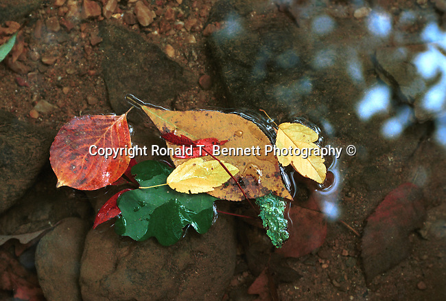 Autumn leaves float down stream Commonwealth of Virginia, Fine Art Photography by Ron Bennett, Fine Art, Fine Art photography, Art Photography, Copyright RonBennettPhotography.com ©