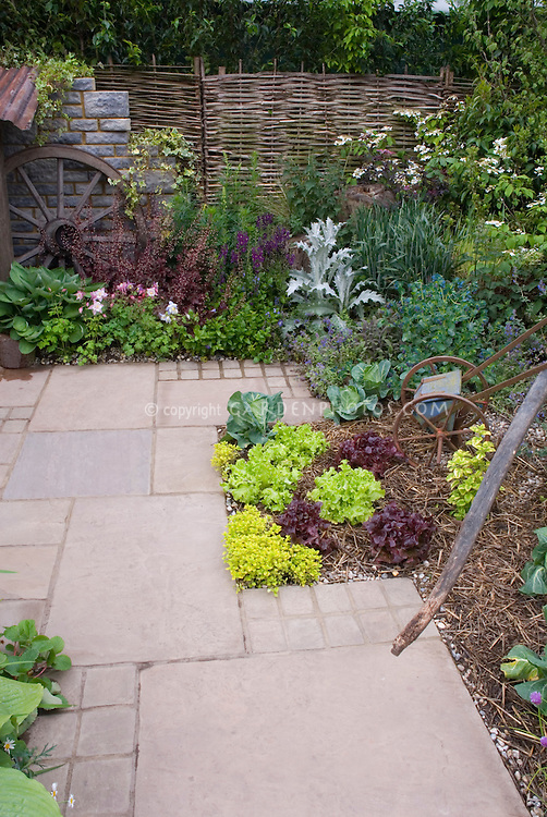 Ornamental vegetable flower garden patio Plant