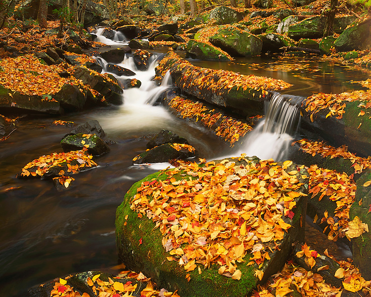 Leaf-covered boulders along the Middle Prong of the Little River; Great Smoky Mountains National Park, TN