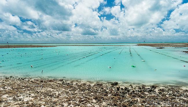 Seaweed farming on Tarawa, Kiribati