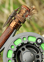 A Skwala Stone Fly and the pattern to match it. Fly fishing the Yakima River, Washington.