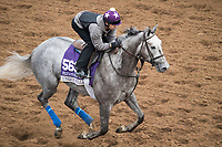 DEL MAR, CA - NOVEMBER 02: Unique Bella, owned by Don Alberto Stable and trained by Jerry Hollendorfer, exercises in preparation for Breeders' Cup Filly & Mare Sprint at Del Mar Thoroughbred Club on November 2, 2017 in Del Mar, California. (Photo by Michael McInally/Eclipse Sportswire/Breeders Cup)