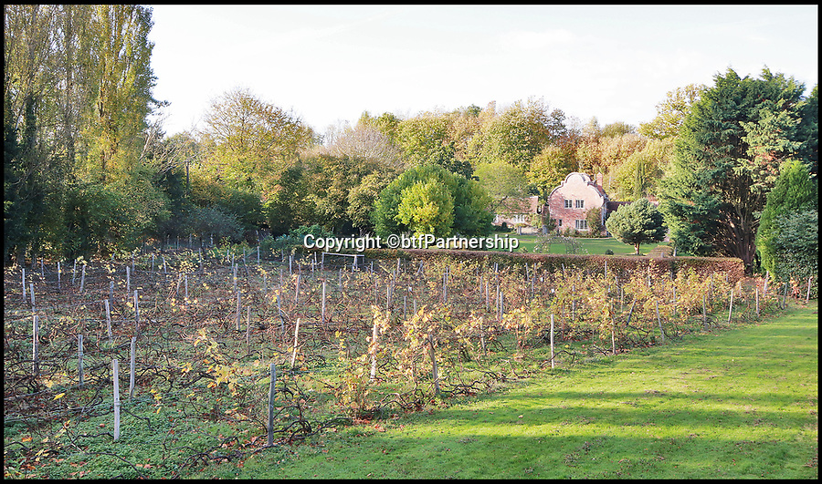 BNPS.co.uk (01202 558833)<br /> Pic:  btfPartnership/BNPS<br /> <br /> 1.5 acres of vines...<br /> <br /> What a corker!<br /> <br /> A charming period farmhouse that comes with its own vineyard is the perfect investment for a homebuyer with a lot of bottle.<br /> <br /> Walnut Tree Farm, near Ashford, Kent - on the market for £920,000 - is in a beautiful rural spot but less than an hour from London.<br /> <br /> It has a private vineyard of 1.5 acres with grape varieties including chardonnay, pinot noir and pinot meunier and produces between 300 and 500 bottles a year, depending on the harvest.<br /> <br /> The farmhouse was originally an apple store for the large Dering estate, owned by the Dering family of baronets, until a lot of the farmland and buildings were sold off in the early 20th century.