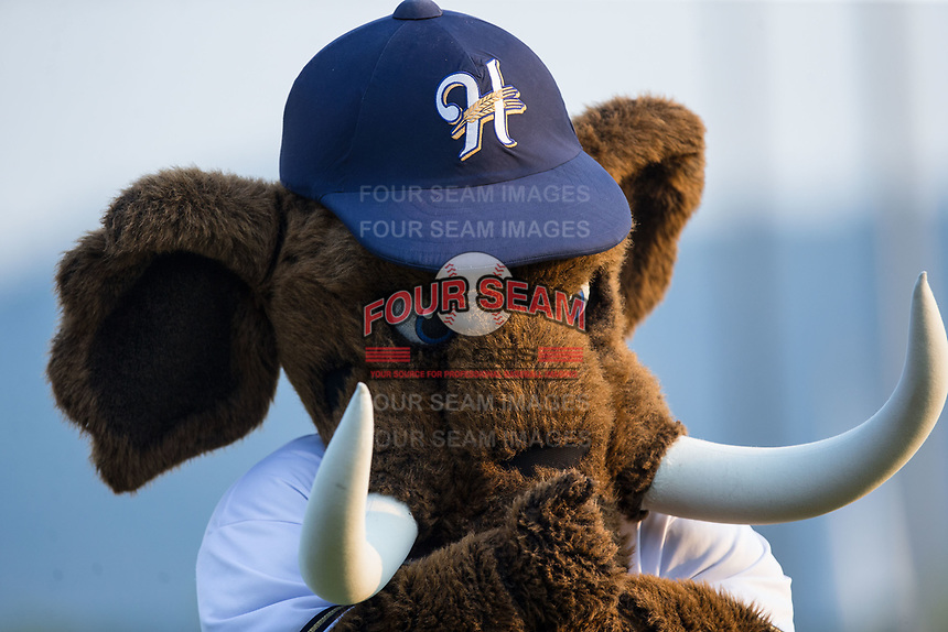 "Helena Brewers mascot ""Wally the Woolly Mammoth"" during player introductions prior to the game against the Orem Owlz at Kindrick Legion Field on August 17, 2017 in Helena, Montana.  The Owlz defeated the Brewers 5-2.  (Brian Westerholt/Four Seam Images)"