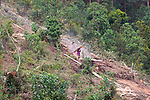 Young Workers Carrying Milled Wood Down Hillside