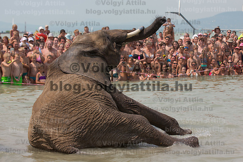 People watch as circus elephants of the Caselly Family take a bath in lake Balaton in promotion of the Circus Night event at Balatonlelle (about 140 km South-West of capital city Budapest), Hungary on July 18, 2015. ATTILA VOLGYI