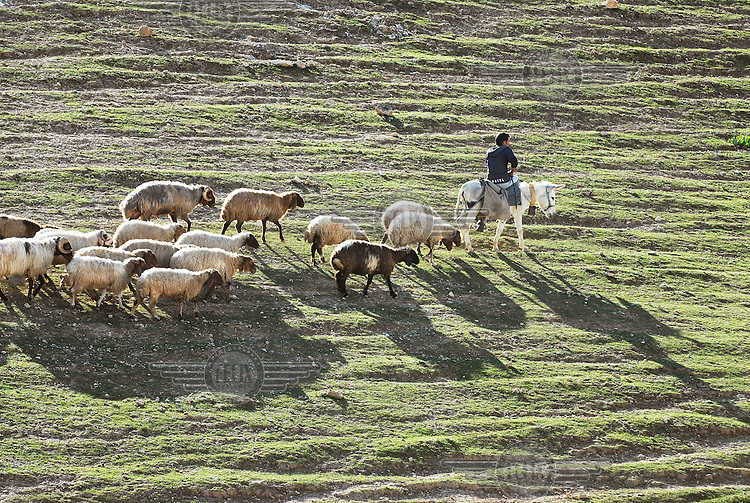 A young Bedouin herder with a flock of sheep in a rural area of the West Bank. Although the Bedouins have been living in this area for centuries, the Israeli government is pushing them to give up their nomadic existence and start living in Bedouin cities.
