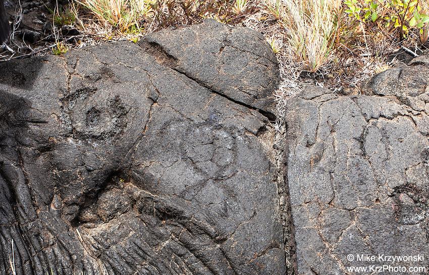 Turtle (honu) petroglyph at the Pu'u Loa Petroglyph Field in Hawaii Volcanoes National Park, Big Island, Hawaii