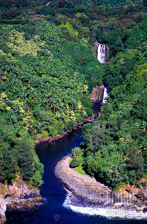 A waterfall and stream head to sea through the lush greenery of the Hamakua Coast.