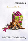 Marcello, REALISTIC ANIMALS, REALISTISCHE TIERE, ANIMALES REALISTICOS, paintings+++++,ITMCEDH1362,#A#, EVERYDAY ,dogs,puppys