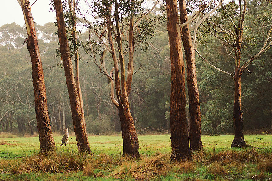 Image Ref: A015<br /> Location: Grampians<br /> Date of Shot: 20th September 2013