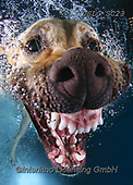 REALISTIC ANIMALS, REALISTISCHE TIERE, ANIMALES REALISTICOS, dogs, paintings+++++SethC_Charley_IMG_9696rev2,USLGSC23,#A#, EVERYDAY ,underwater dogs,photos,fotos ,Seth