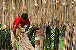 Pictured:  The jute stick making process.<br /> <br /> Workers sit on vehicles laden with hundreds of kilograms of jute sticks.  The men are cocooned on the seats of their brightly coloured bikes by thousands of the plants as they drive the 3 metre-high loads almost 5km to the nearby market.<br /> <br /> The unusual images were captured in Kushita in Bangladesh by amateur photographer Sabina Akter.  SEE OUR COPY FOR DETAILS.<br /> <br /> Please byline: Sabina Akter/Solent News<br /> <br /> © Sabina Akter/Solent News & Photo Agency<br /> UK +44 (0) 2380 458800