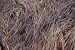 TIME, Arapahoe County Assignment..Small towns in far eastern Arapahoe County.  Byers, Deer Trail, Aurora, Watkins....